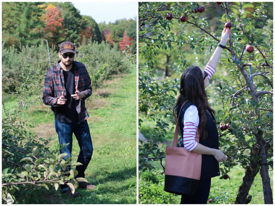 apple_picking_in_maine