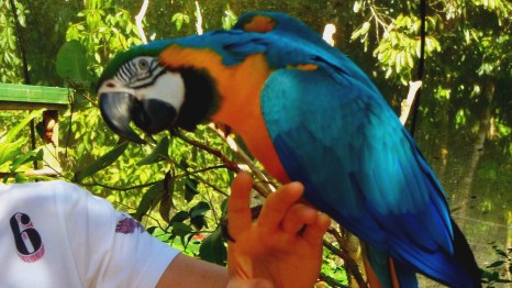 Birdworld, Kuranda, Queensland