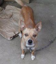 Missing Dog - Sandy