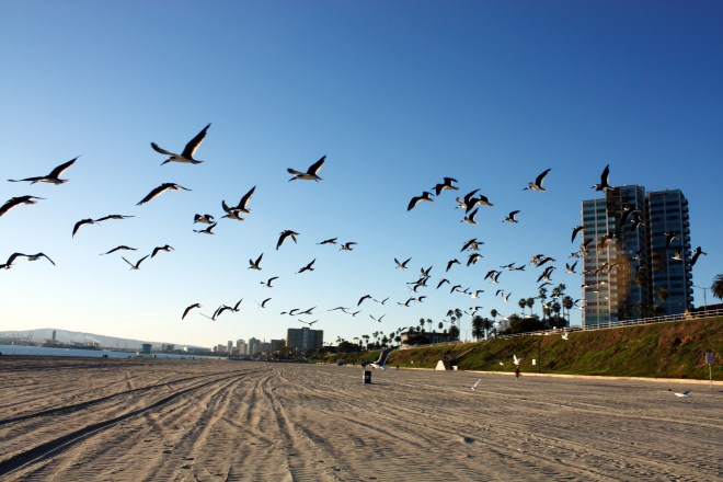 Long_Beach_California