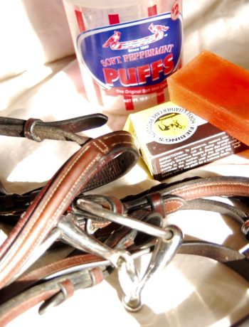 Bridle next to some saddle soap and a bucket of water.