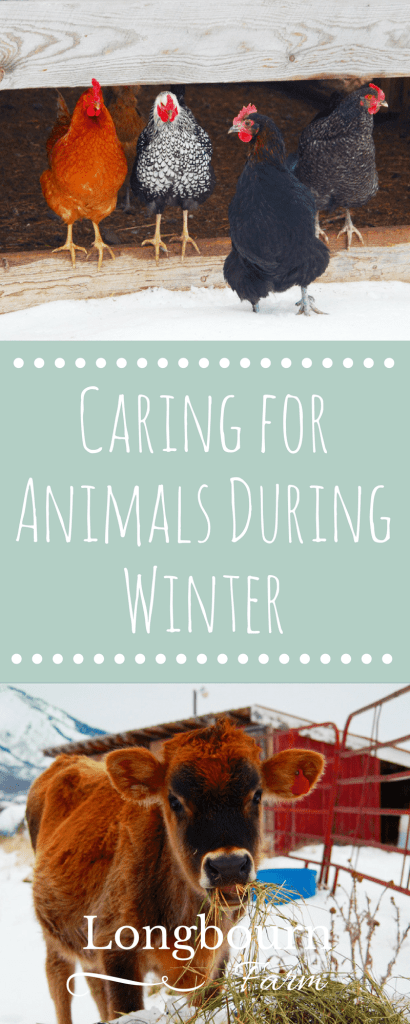 Caring for Animals During Winter takes a little more thought and effort, but it isn't hard. Read this post for tips on how to keep yours comfy this winter!