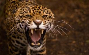 Jaguar Image avant photomanipulation