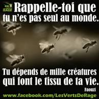 Verts de rage 4 - citation Faouzi