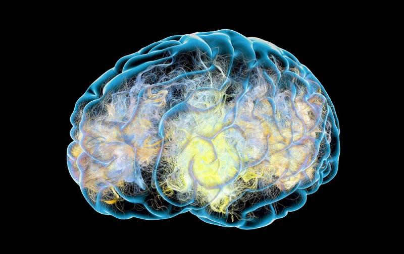 Alzheimer's and autophagy.