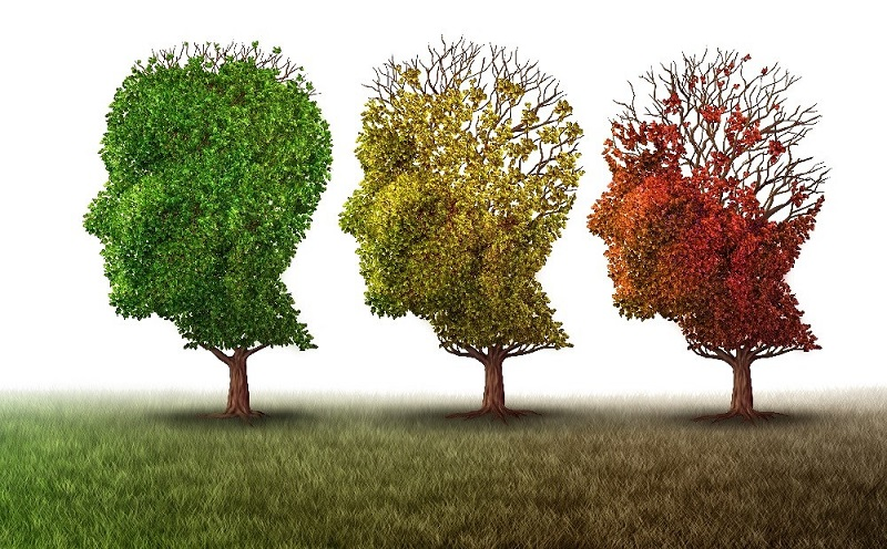 Rapamycin prevents Alzheimers in mice say researchers.