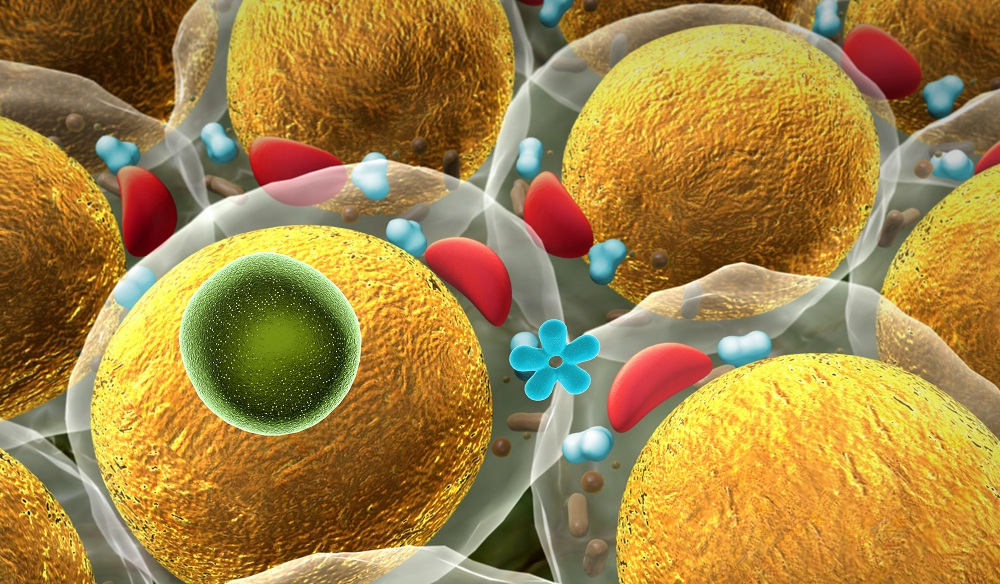 Fat cells move to heal bodies