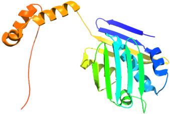 Heat shock protein wraps around unfolded proteins.