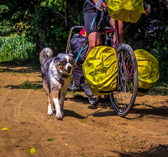 Traveling with a Dog