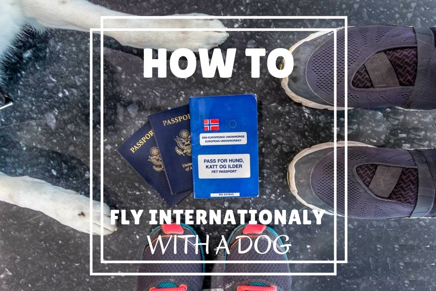How to fly internationally with a dog | Long Haul Trekkers
