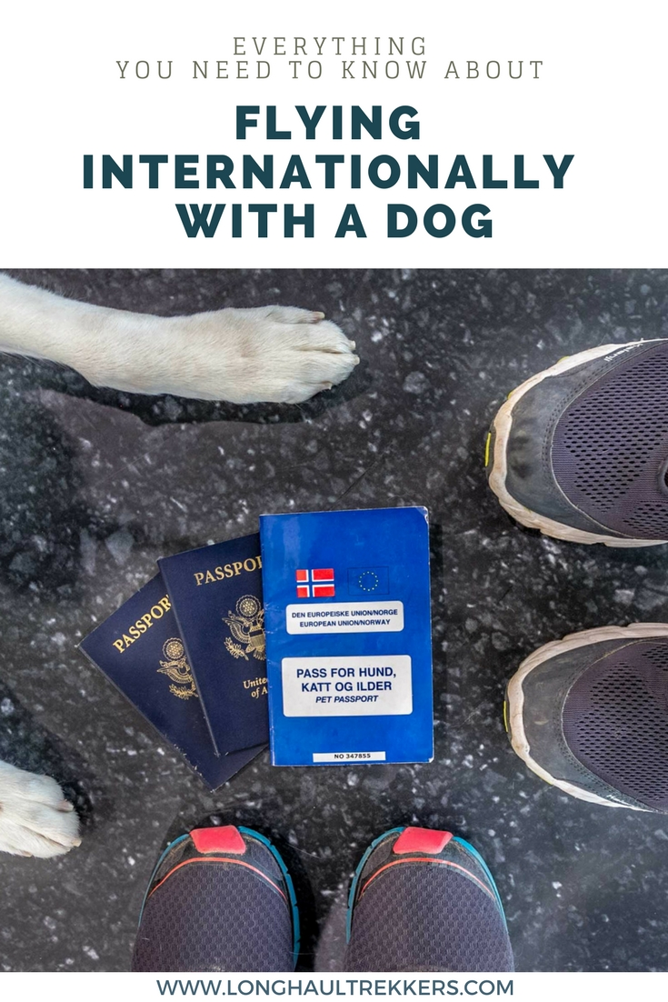 how to move your dog internationally