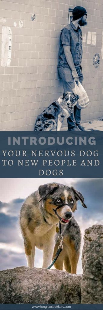 Introducing your nervous dog to new people and dogs | Long Haul Trekkers
