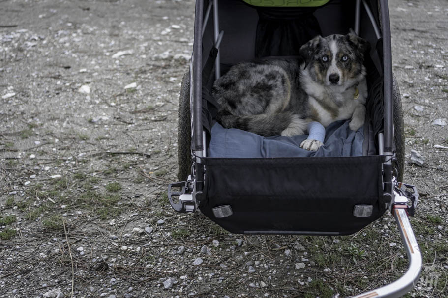 You can store your dog's gear inside the trailer, in pockets, or in the front where there is space.