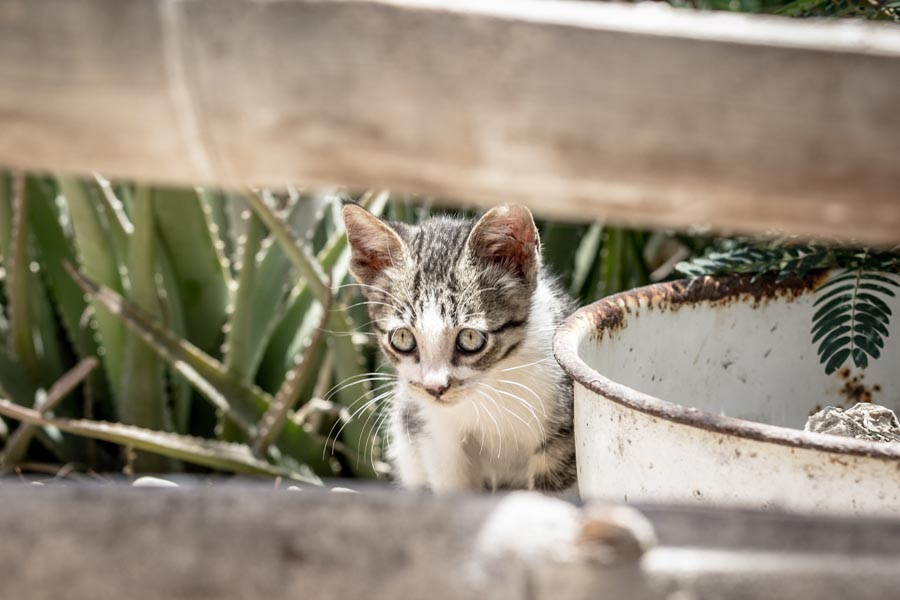 Two Weeks Volunteering at an Animal Shelter in Northern Peru | Long Haul Trekkers #animalrescue #adoptdontshop