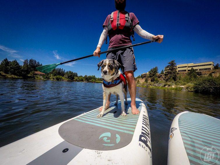 Australian Shepherd Stand Up Paddle Boarding - The Best Adventure Dog