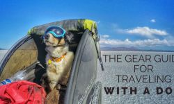Travel with a Dog Gear Guide