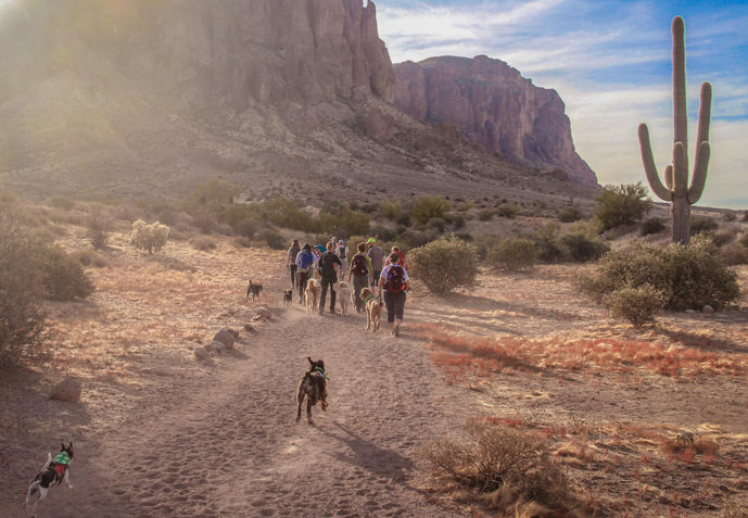 dog trail etiquette with a pack of dogs.