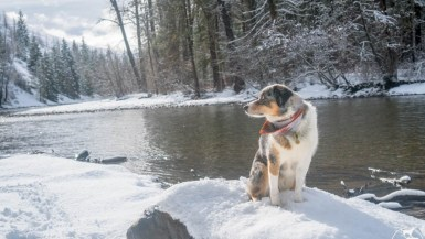 Suncadia Resort: The Ultimate Pet-Friendly Vacation Rental in Central Washington | Long Haul Trekkers
