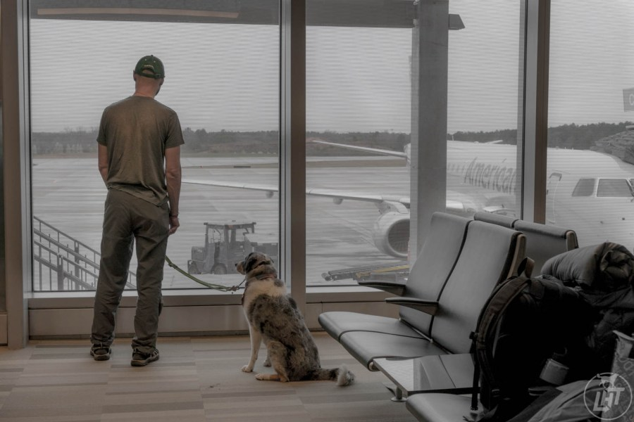 We hear all about the horror stories flying with a dog, and what we really want to know is whether it is safe to put our pets on a plane. Read on to learn more about the steps to take in order to keep your dog safe while flying.