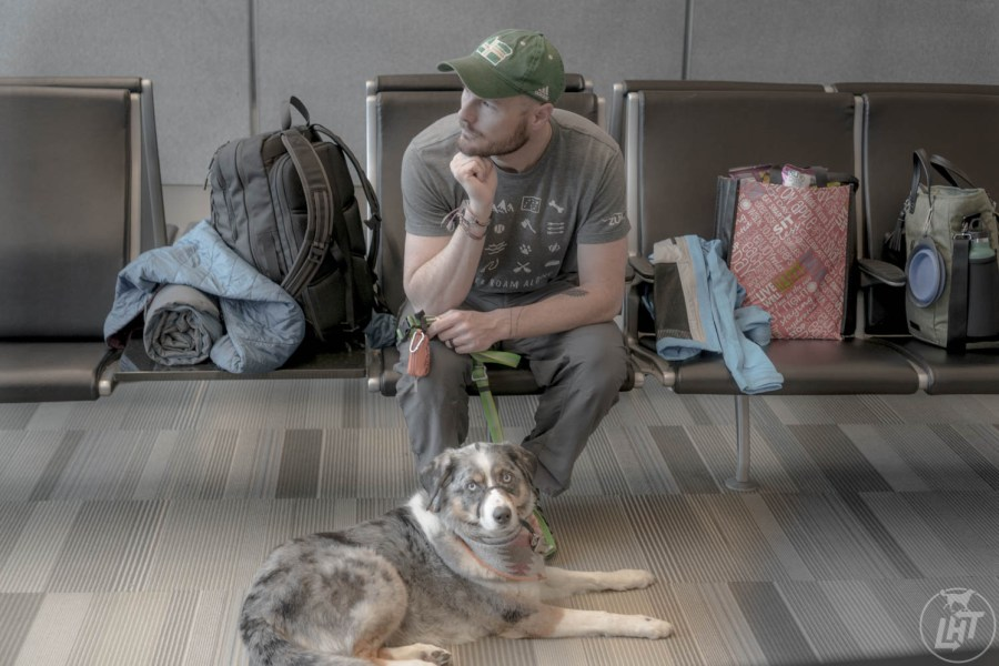 Book a long layover when flying internationally with a dog, so your pup can have a break in between flights.