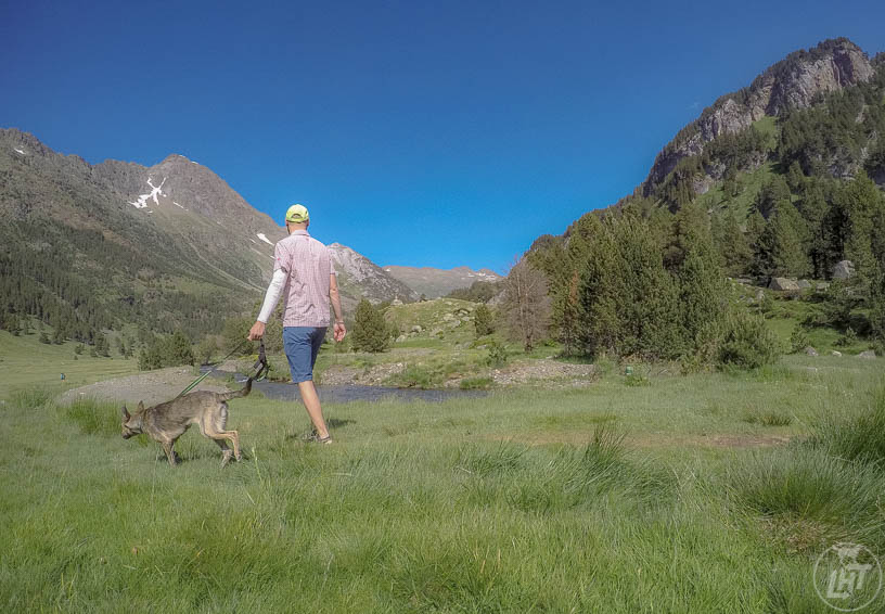 Hit the trails, seek shade, or find higher elevation to escape the heat and keep your dog cool in hot weather.