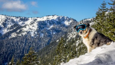 You may never have thought about the importance of sun protection for dogs, but like humans, the sun can lead to damaging eye conditions and skin cancer. Read the article to see how you can prevent sun damage to your dog.