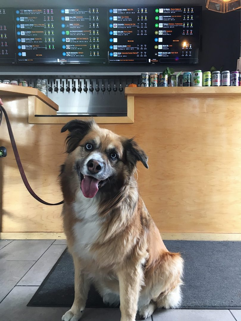 Head to Growler's Taproom with your dog on Wag Wednesday and get 10% off your bill.