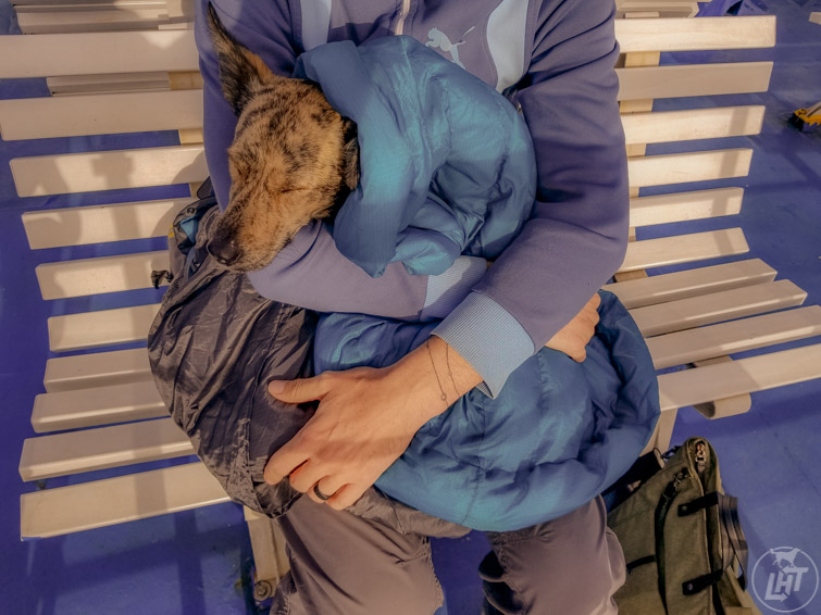 A warm dog bed, like the Whyld River Doggy Bag will keep your pup warm while you rest and provide a cozy spot when you get back to the car.