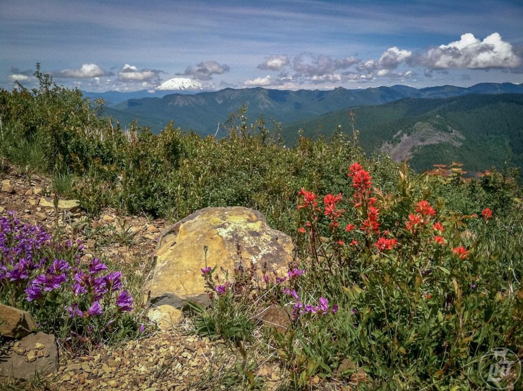 Silver Star Mountain is a great dog friendly wildflower hike near Portland, Oregon.