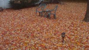 Seasonal Fall Leaf Cleanup Services Town of Brookhaven Holbrook NY