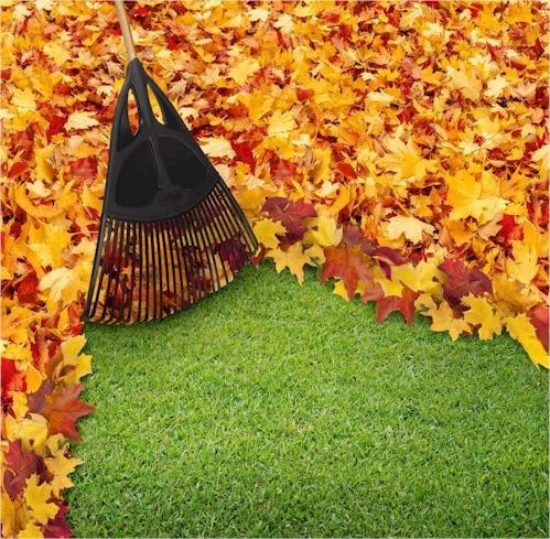 Seasonal Leaf cleanup Services Long Island New York