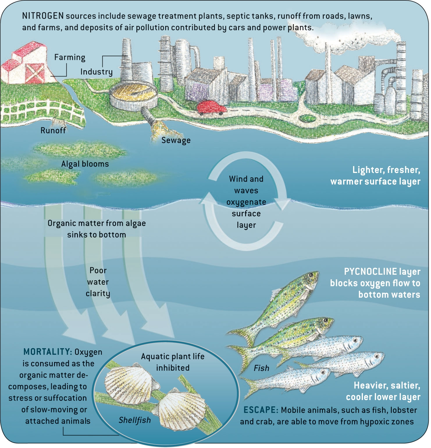 6 Reasons Oceanic Pollution And Overfishing Need To Be