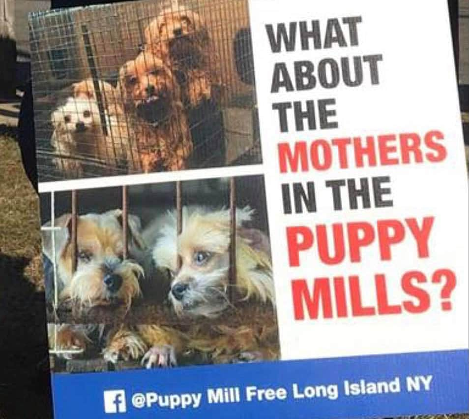 puppy mill protest long