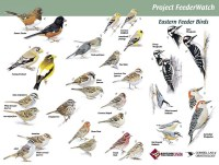 Nature Journal: Bird Watching Resources & Printables