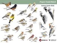 Nature Journal: Bird Watching Resources & Printables ...