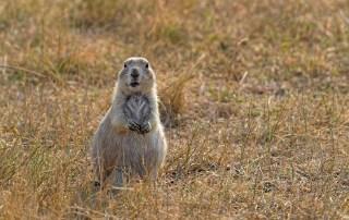 Colorado Prairie Dog hunting at Longmeadow Game Resort