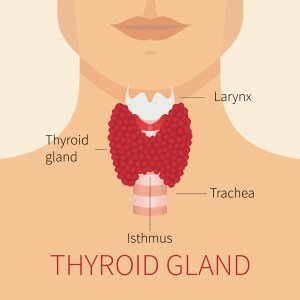 thyroid chiropractic care longmont