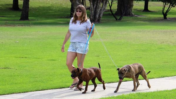 Bonnie and Clyde take Vanessa for a walk