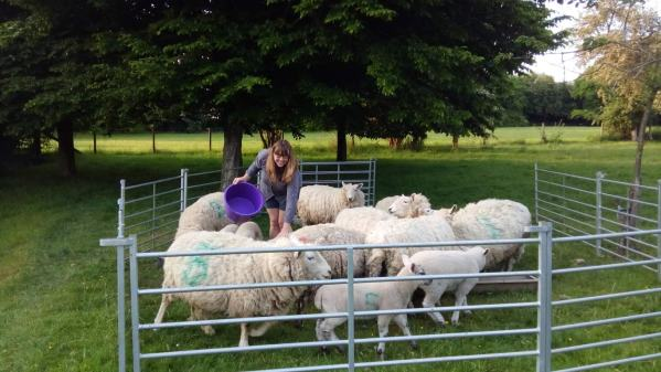 Vanessa feeding the sheep at our country house sit in Droxford, UK