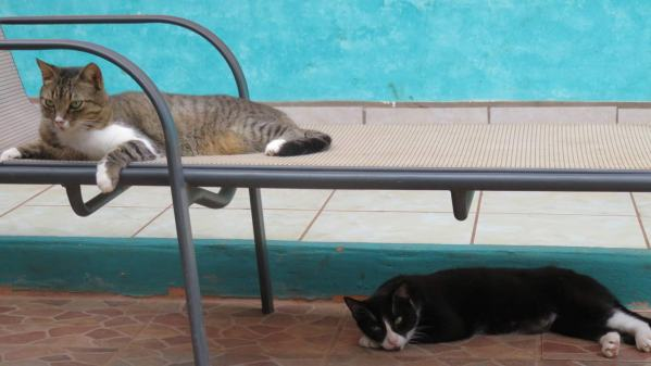 """What are you talking about? Of course the sun lounger is for us to use!"""