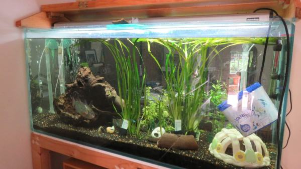 Lots of new baby fish made cleaning the fish tank a bit of a nerve-wracking task