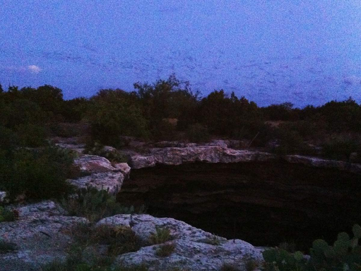 3.5 million bats emerge !