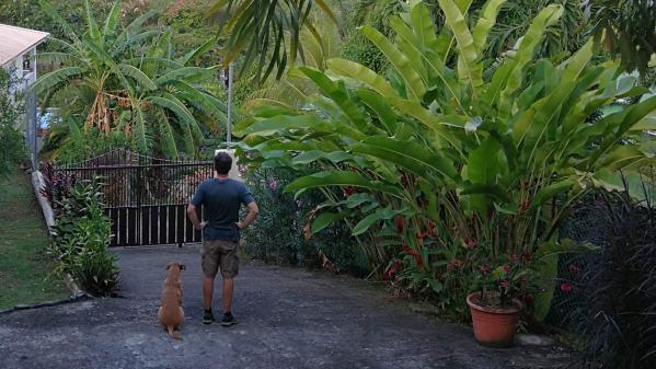 Ian and Bigdog keep an eye on what's going on outside
