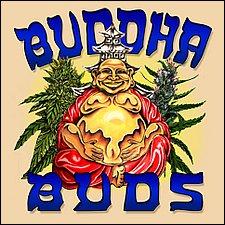 Buddha Says Repeal Cannabis Prohibition