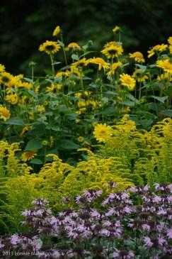 Flowers 20130823-10
