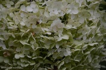 Flower 2013.08.23-22