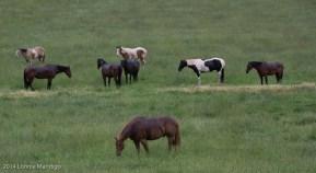 Horses grazing near the Colorado River.