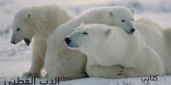 حياه الدب الابيض (القطبي)