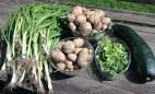 First veggie crop of the year