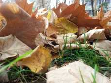 mopana-leaves-we-ll-never-fall- alone-01